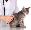 Ветеринарные клиники в Белинском